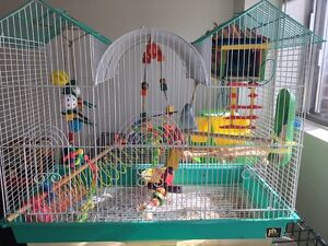 Parrotlet and all accessories