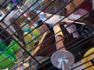 Taking in birds that need a loving home