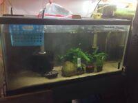 Aquariums for sale multiple sizes