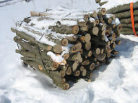 bush/trees for fire wood