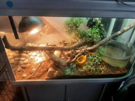 Waterdragons and setup