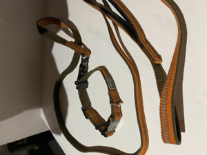 Collar and leash for small dog