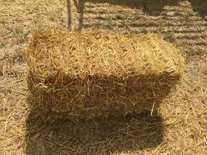 Small Square Straw. Province Wide Delivery