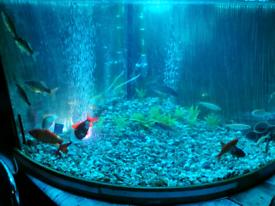 Corner fish tank (large)