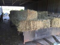 150 + hay bales loaded on a trailer ready to be delivered