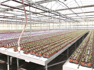 60,000sqft greenhouse for rent