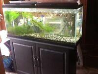 55 gal aquarium with stand