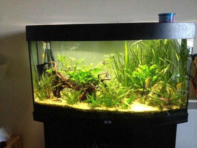 Piranha Fish Tank Fish Tank Full Set up