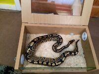Small Vivarium/terrarium for reptiles, snake/lizard, with accessories