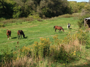 Horse Boarding - Baden Kitchener / Waterloo Kitchener Area image 1