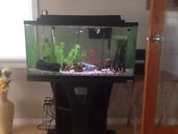 33 gallon tank with fish