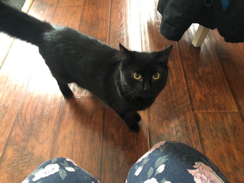 chatte noire à manger maison cul porno