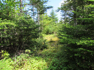 NEW LISTING..12 ACRE RIVERFRONT ESTATE…181 SALMONIER LINE. St. John's Newfoundland image 15