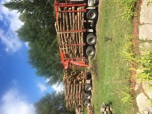 FULL LOG LENGTH FIREWOOD DELIVERED Kawartha Lakes Peterborough Area image 1