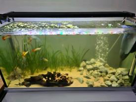 Tropical Aquarium incFish