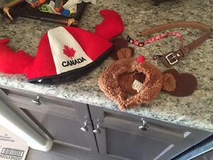 Small dog collar and accessories