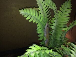 Looking for free reptiles Peterborough Peterborough Area image 6