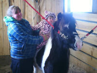 *Flashy*5 year old Shetland Paint Pony Gelding/Harness Available