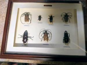 Bug collection