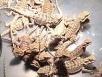 Reptile Rescue Looking for Unwanted Reptiles!