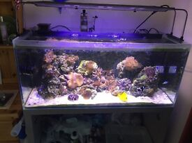 Fluvel m90 marine full set up, maxspect razor led
