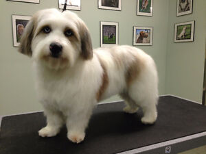 Dog Grooming Services London ON
