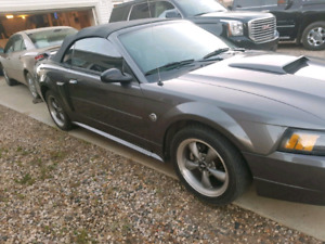 2004 ford mustang GT 40th anniversary edition