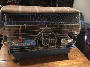 2 Female Skinny Pigs and Cage
