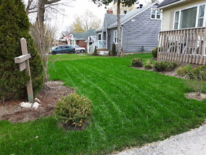 Lawn cutting/SOD Laying and more..