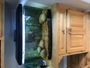 Fish tank, fish and all accessories