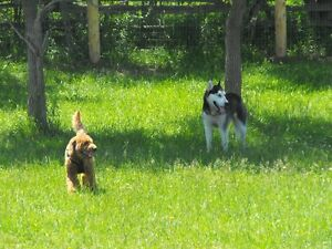 YOUR DOGS ENJOY A 25 ACRE OF FUN Kawartha Lakes Peterborough Area image 8