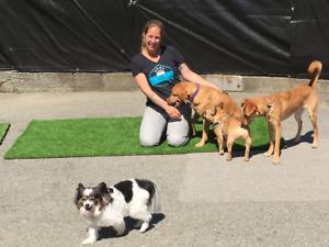 Doggy Daycare in South Burnaby - The Re-Treat Doggy Daycare