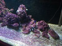 Marine live stock for sale