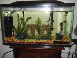 selling my aquarium with all accessories including fish
