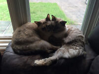 Two cats for free to good home