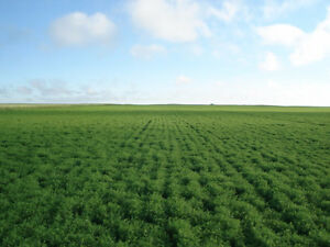Wanted Farm Land for Cash Rent