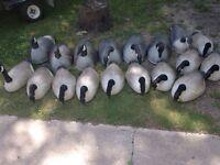 Goose decoys-- make an offer.