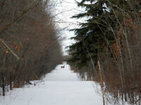 73 acres forested land - 25 minutes North of Drayton Valley