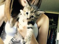 1 Beautiful Kitten Left