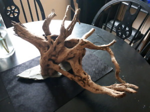 Large piece of drift wood