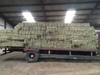 Horse hay conventional size bales. Goats sheep etc excellent quality. £3.50