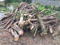 FREE Store some wood ready for winter