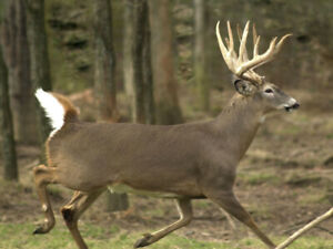 New hunter looking for land to hunt 2019 deer season