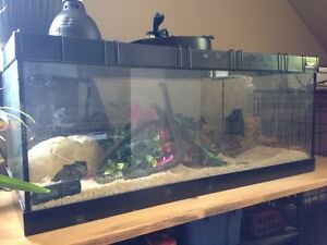 Female ball python with tank, stand and much more
