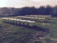 Bee Hives - Would you like some on your property?
