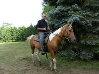 TRADE OR BUY A BEGINNER SAFE BOMBPROOF TRAIL HORSE