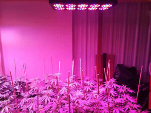 Apollo 10 LED Grow Light 350 W (perfect for 4 plants indoor)