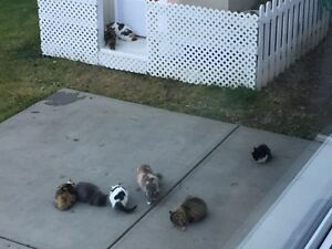 FREE 6 month old feral kittens
