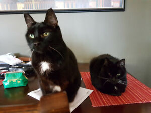 2 Femal Cats, Free to a good home