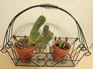 Ornamental metal basket for plants and flowers, cacti and aloe